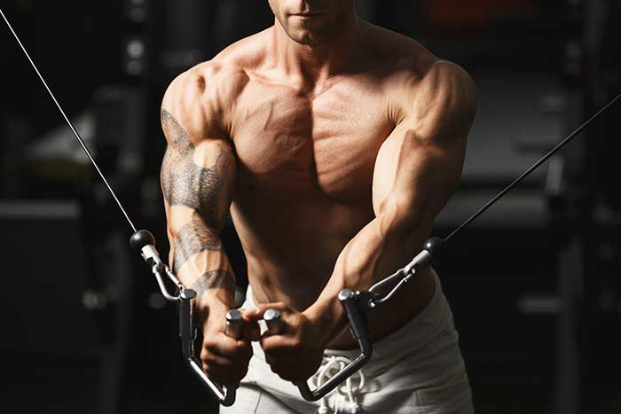 exercices pectoraux musculation